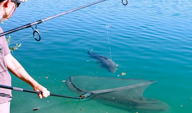 Gigantica Carp - Main Lake | The Carp Specialist